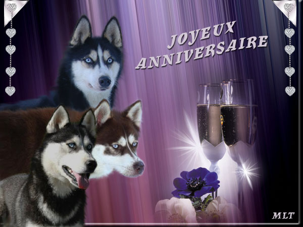 http://www.arkasdogs.org/arkasblogs/oldimages/tutielou/Anniversaire_Magic_Wolf.jpg