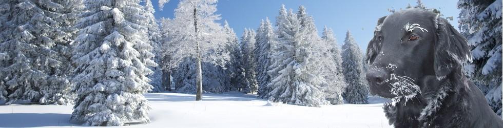 hiver_banniere_kena