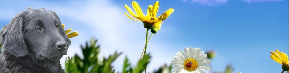 printemps_banniere_kena